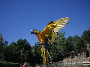 Zoológico De Aves Exóticas La Fantasia en Bucaramanga