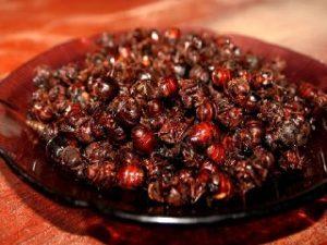 Vendo Hormigas Culonas en Bucaramanga